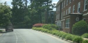 Downtown Daylilies