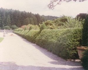 Formal Garden Hedge 2
