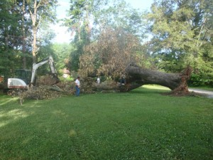 Hendersonville Tree Removal