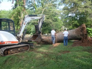 Hendersonville Tree Removal - 2